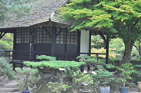 Japanese Gardens (6)