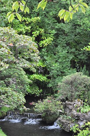 Japanese Gardens (10)